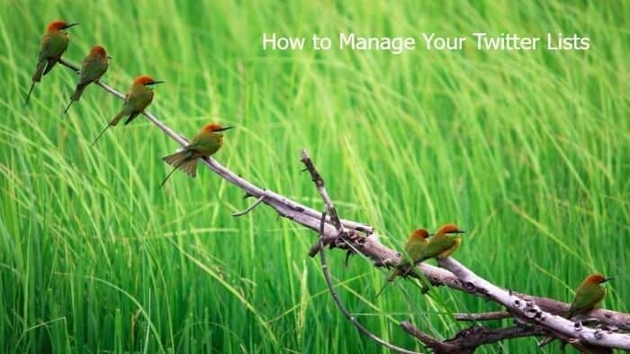 How to Bulk Manage Your Twitter Lists